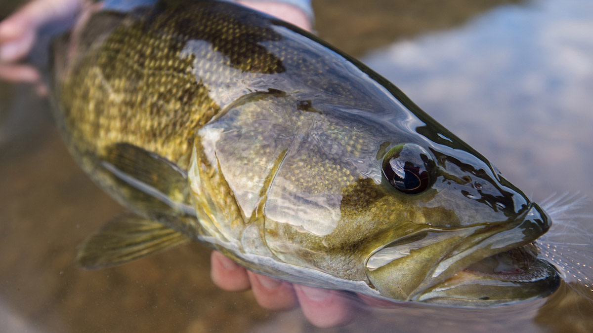 Early Season Smallmouth on America's First National River
