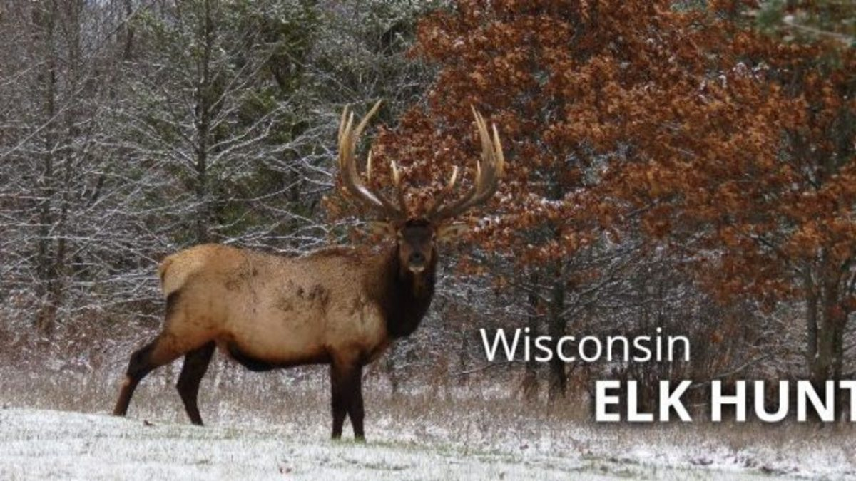 Conservation: More Elk Means More Elk Hunting