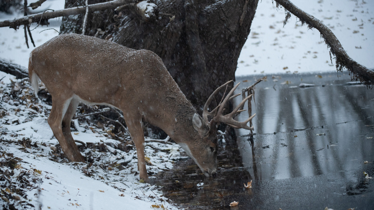How to Kill a Late-Season Buck Without Hunting Food