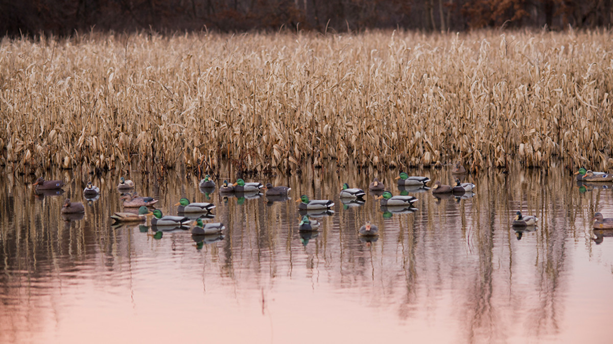 What You Need to Know About Duck Decoy Spreads