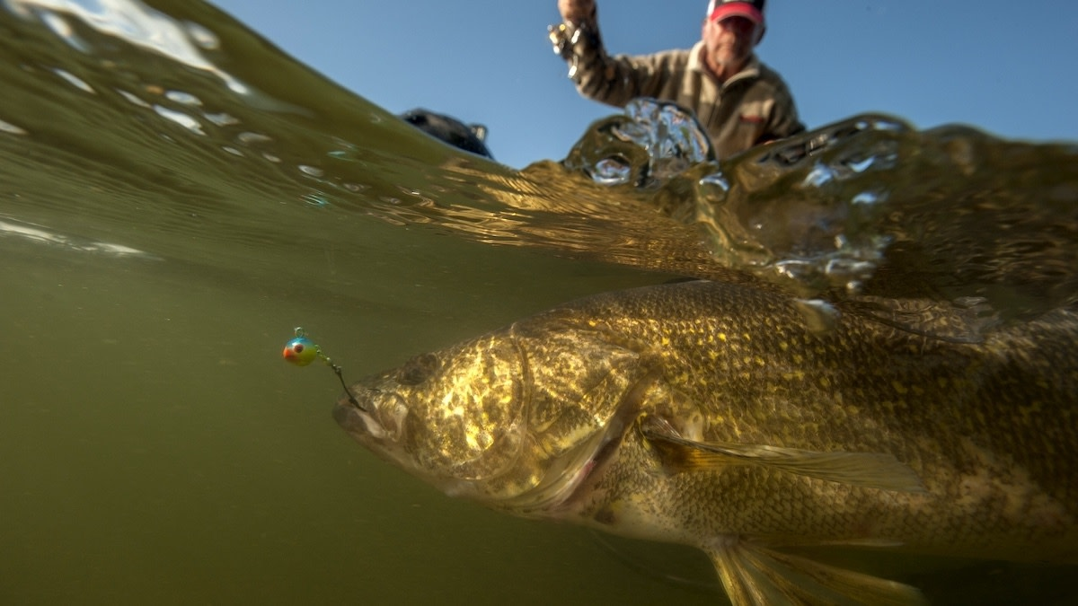 Best Walleye Lures, Baits, and Tactics
