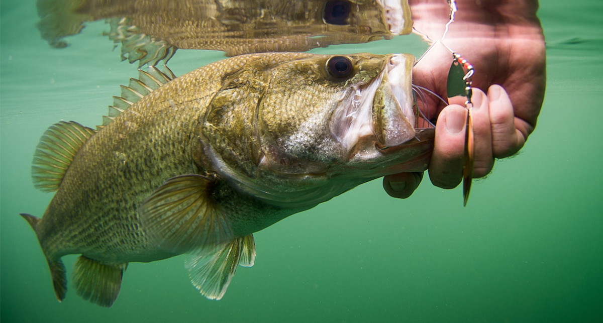 Should You Fish for Spawning Bass? Conflicting Philosophies and Research