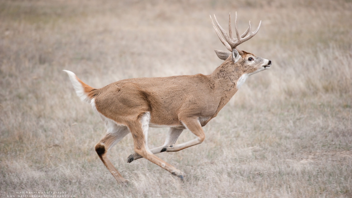 Ask MeatEater: Will You Shoot at Running Game?