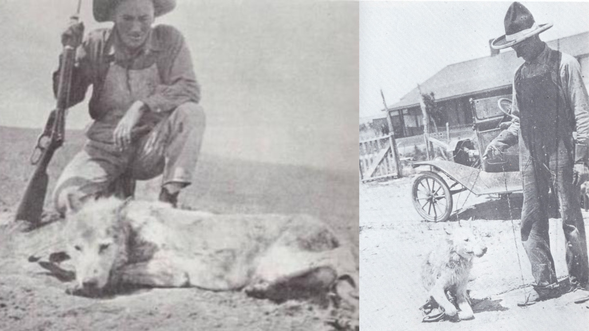Bar Room Banter: Three Toes, The West's Most Notorious Livestock Killer