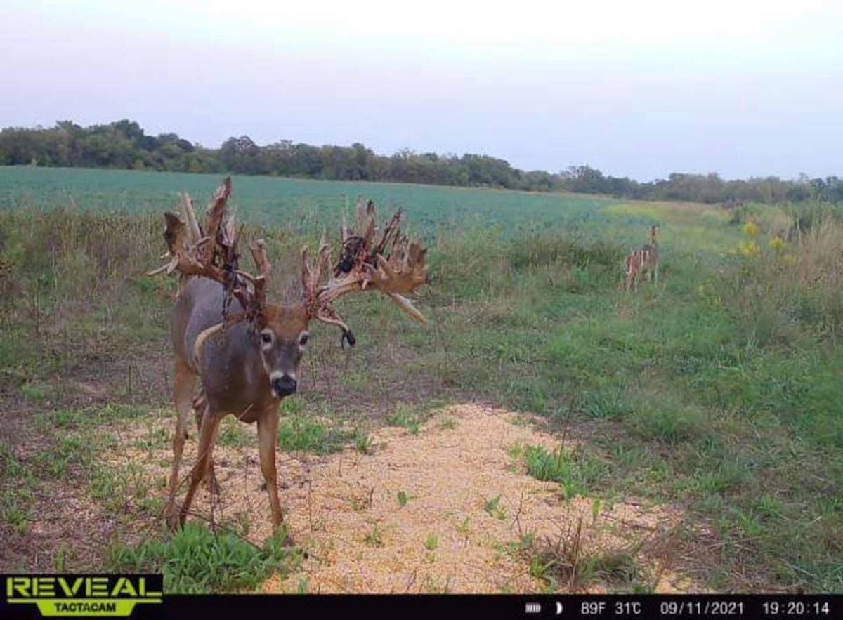 Keating Buck Trailcam