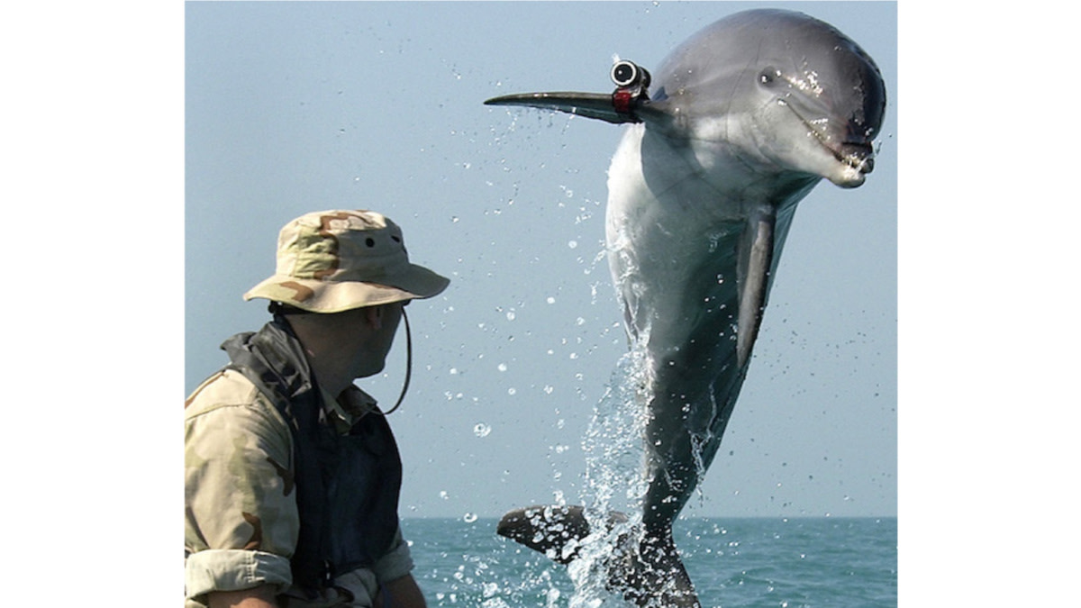 Bar Room Banter: The Navy's 'Attack Dolphins'