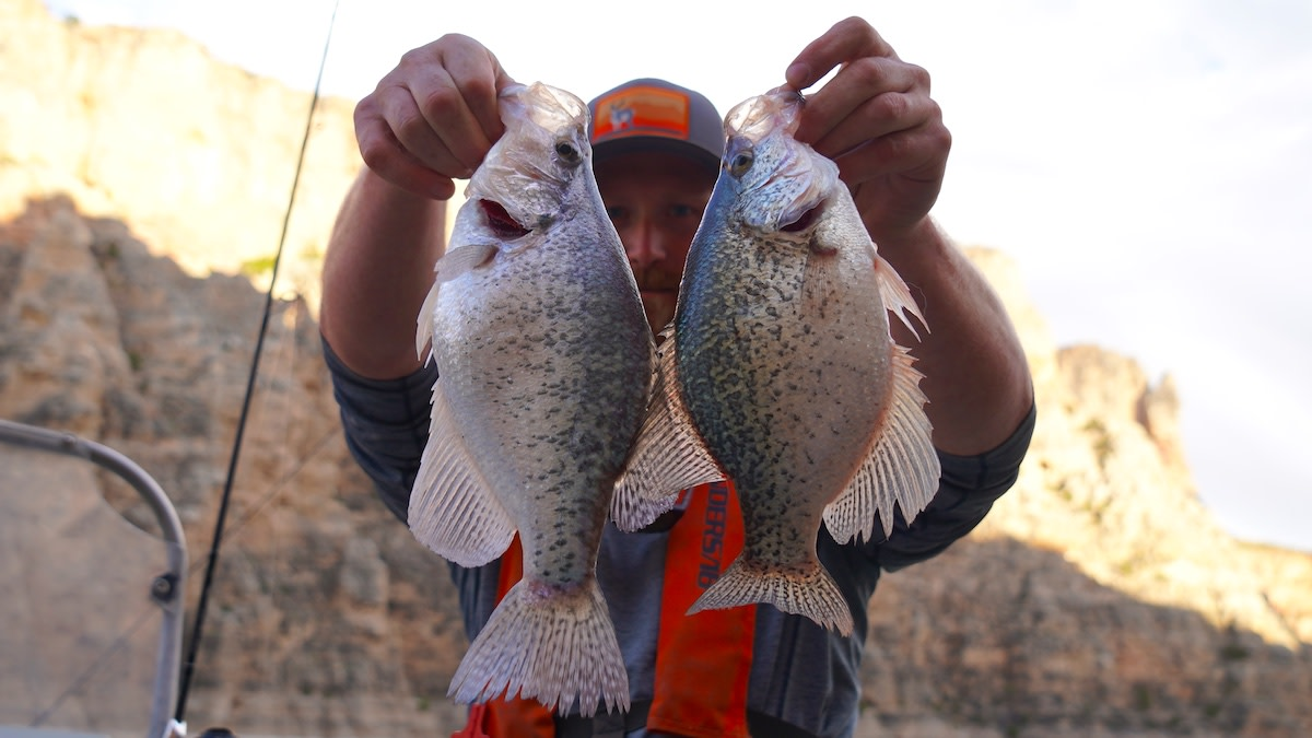 King of Panfish: How to Catch Crappies
