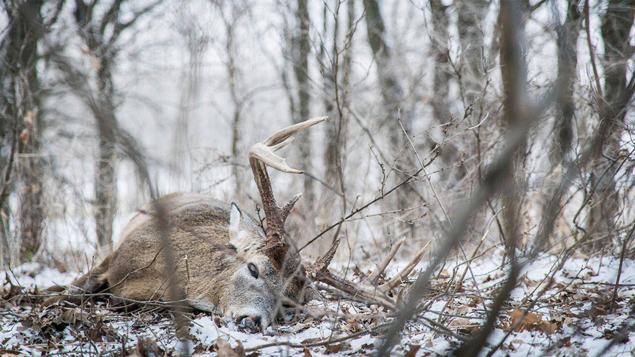 How to Kill a Whitetail Buck in Late November
