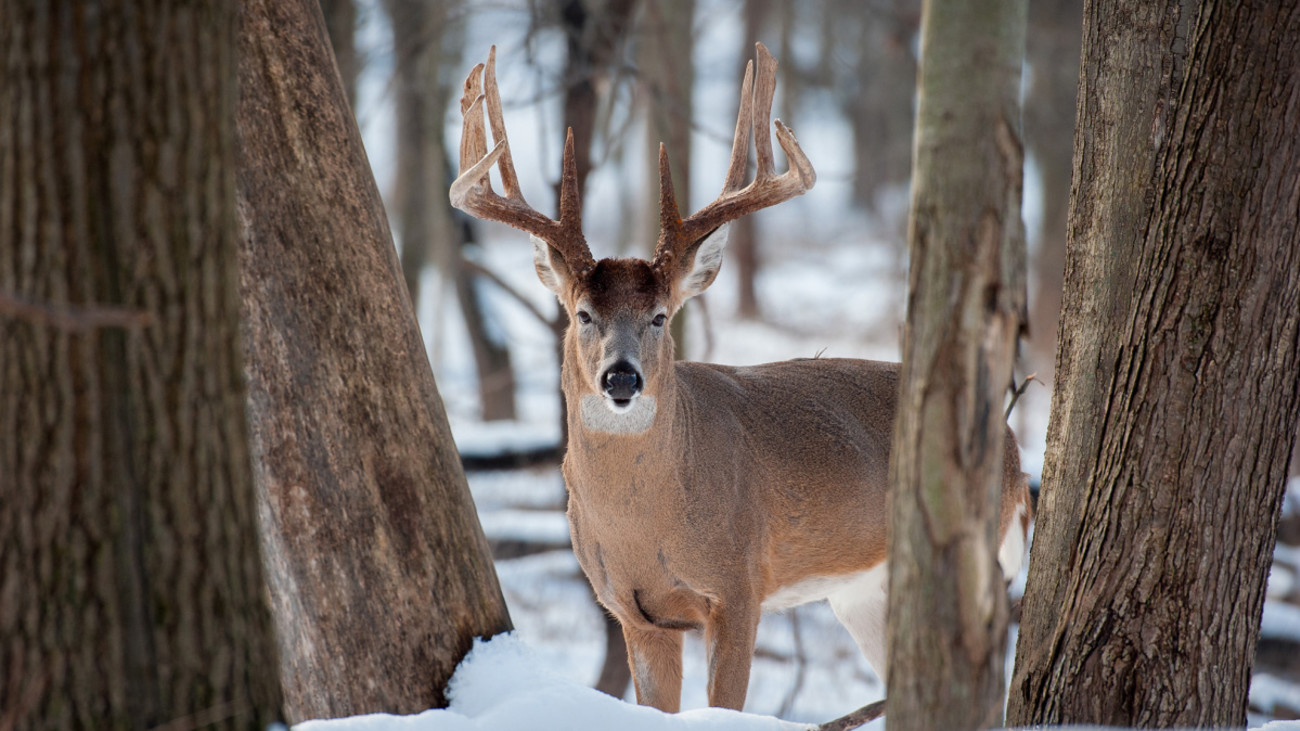 3 Places to Find a Post-Rut Buck