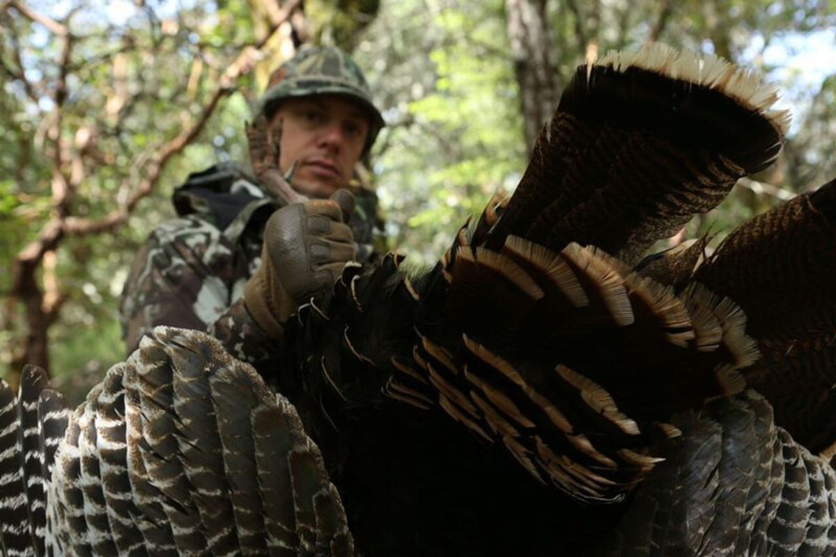 The Methods and Madness of Turkey Hunting
