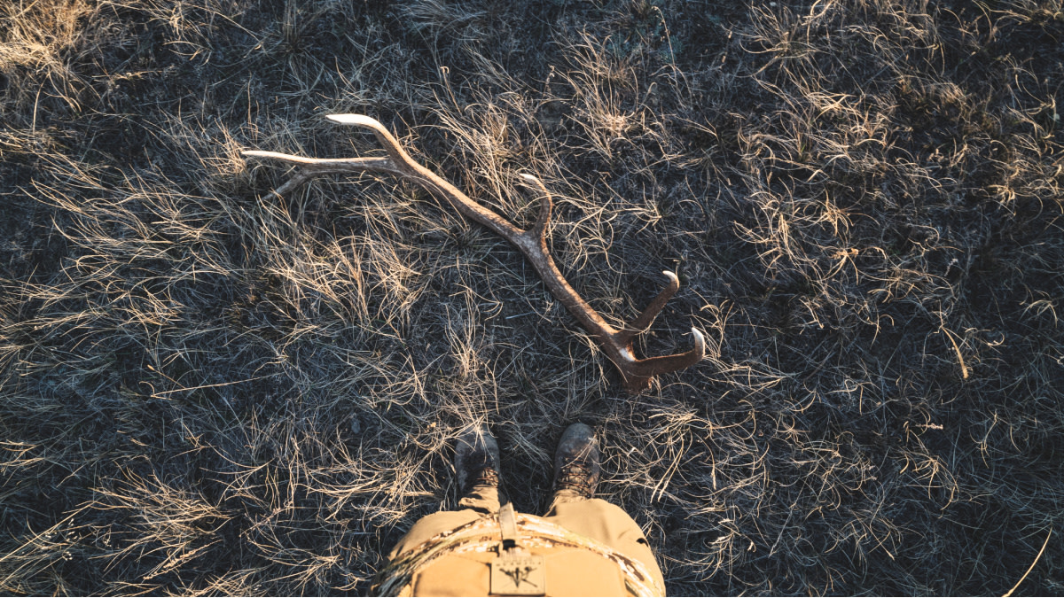3 Guaranteed Places to Find Elk Sheds