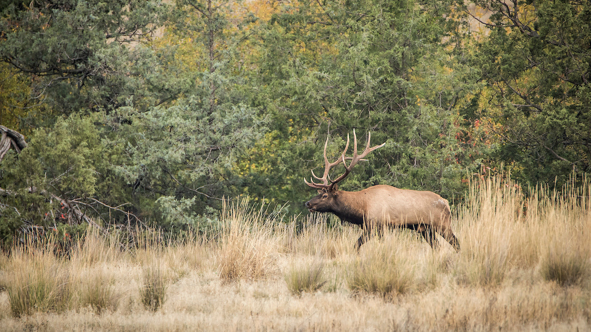 Ask MeatEater: When Should You Take Your First Elk Hunt?