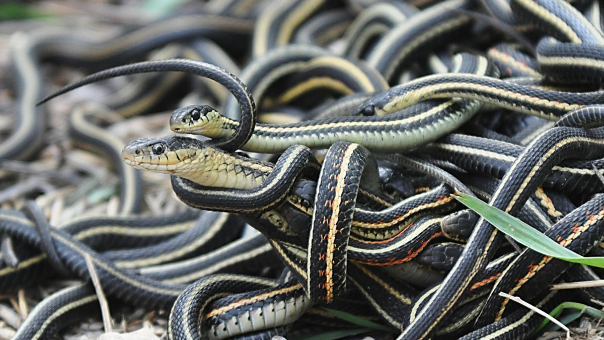 Why Are Humans Scared of Snakes?