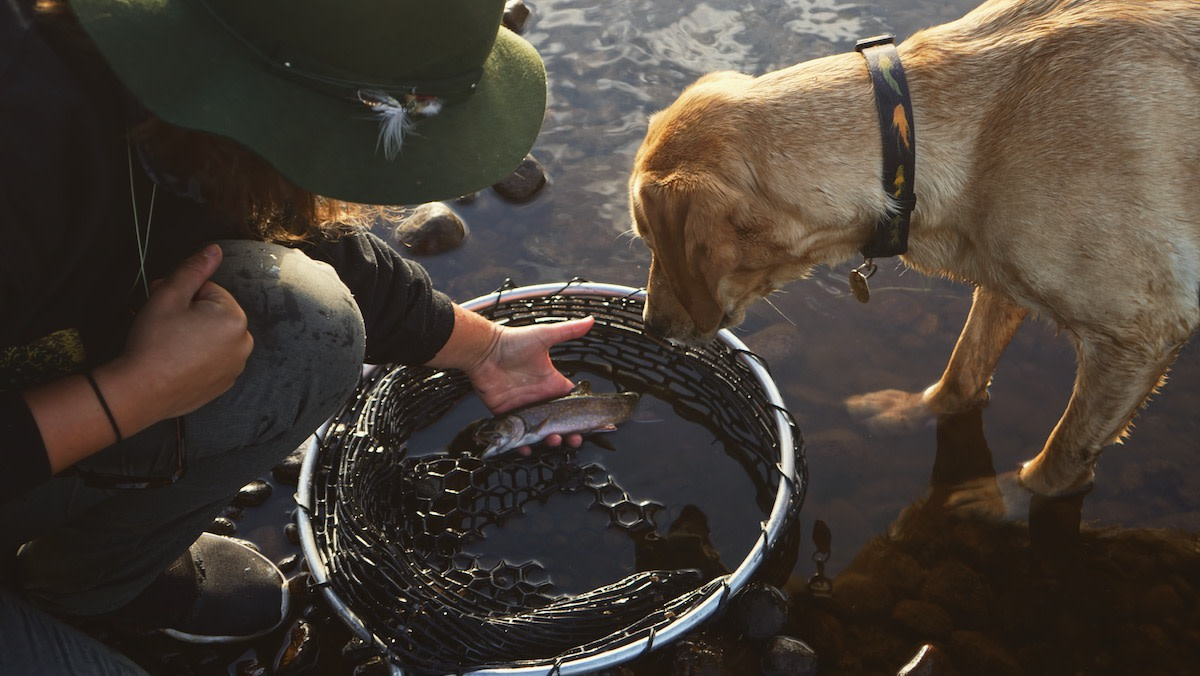 How to Train a Good Fishing Dog