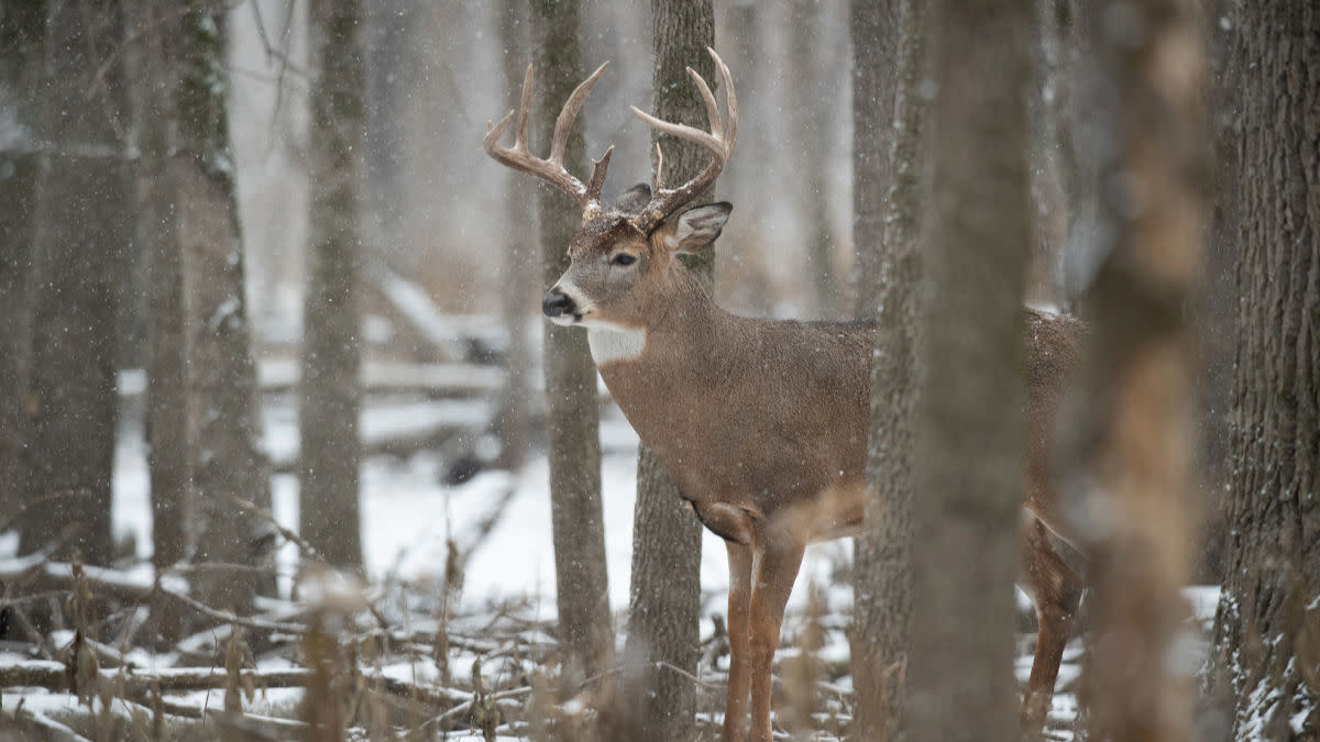 How to Kill a Late Season Buck From the Ground