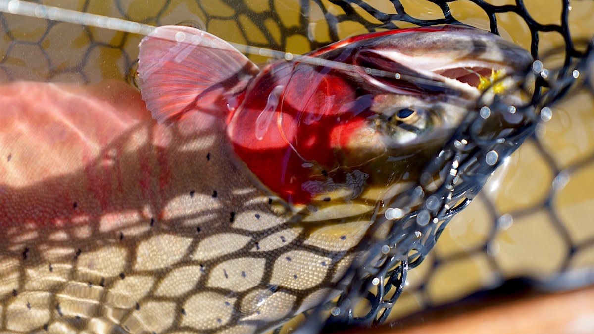 How the Supreme Court's and EPA's New Clean Water Act Guidelines Affect Hunters and Anglers