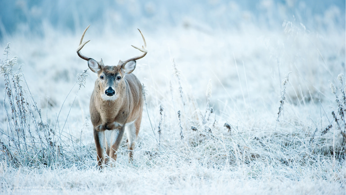 How to Kill a Whitetail Buck During a Cold Front