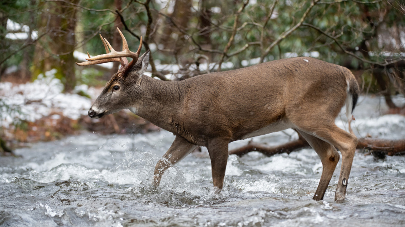 3 Places to Kill a Whitetail Buck at Midday