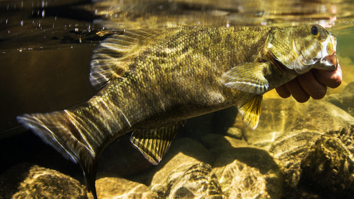 What are the Effects of Catching Spawning Bass?