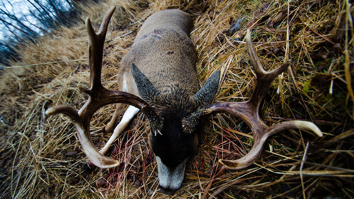 Kodiak December: A Hunt and a Blacktail of a Lifetime