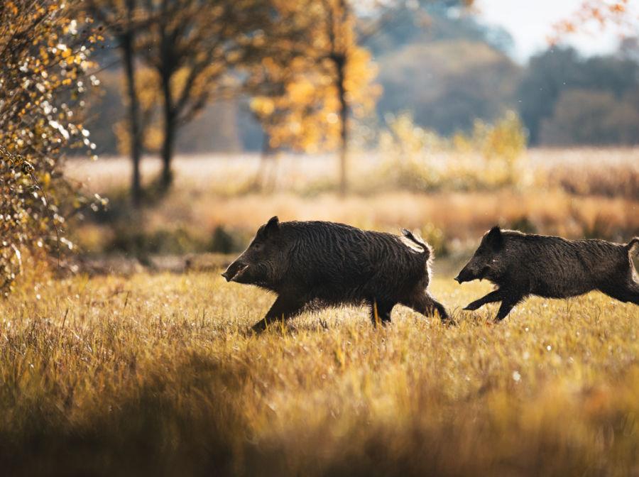 Z8i 0,75 VIEWPLIUS Driven hunting in France ID1066459