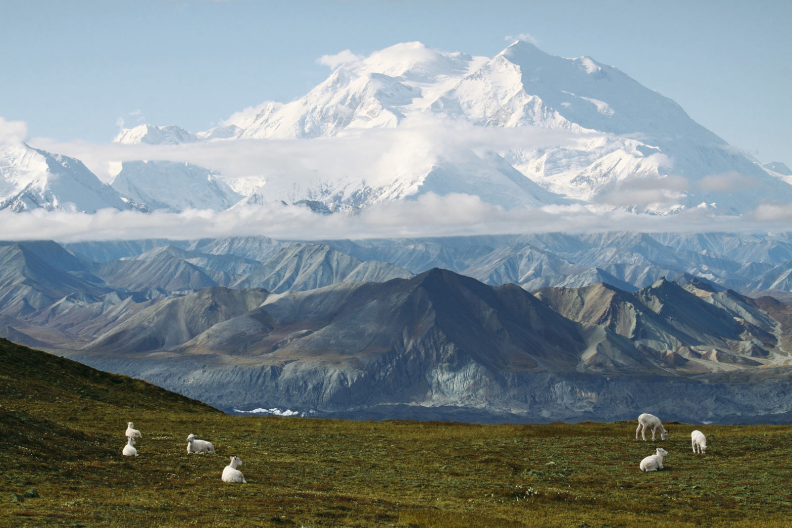Wild Sheep Challenge Hunt-Alaska