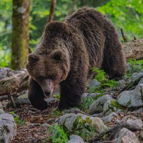 !!! Andreas Hütten Entering the bears' realm O/ - Andreas Hütten - DSC01399-Bearbeitet