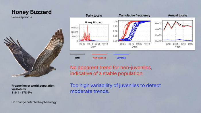 How to count 1 million raptors  - Batumi Raptor Count / Vansteelant et al. In press Honey Buzzard
