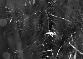 snipe Autumn Birding in Scotland b/w