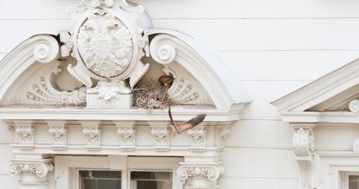 Kestrels never read the script Swarovski Optik Digiscoping birdwatching