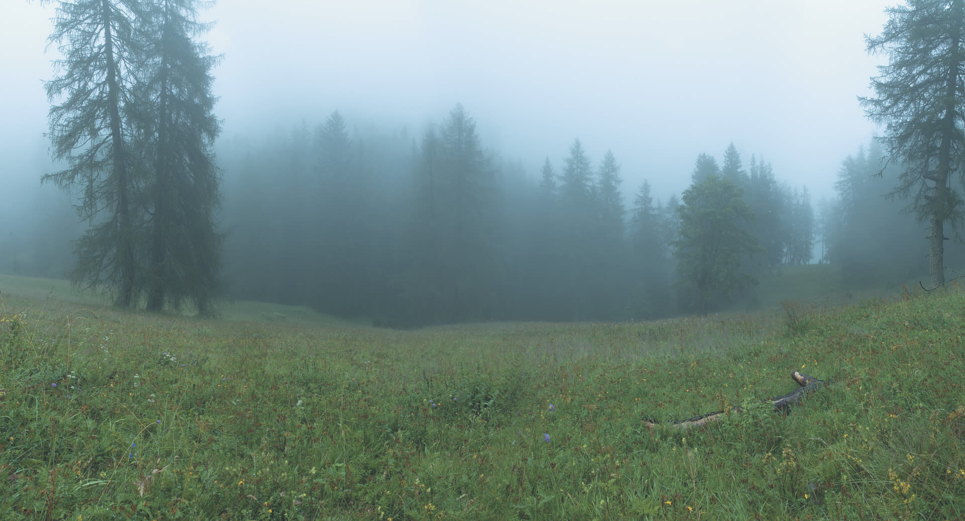 K09 wald wiese nebel tirol 01
