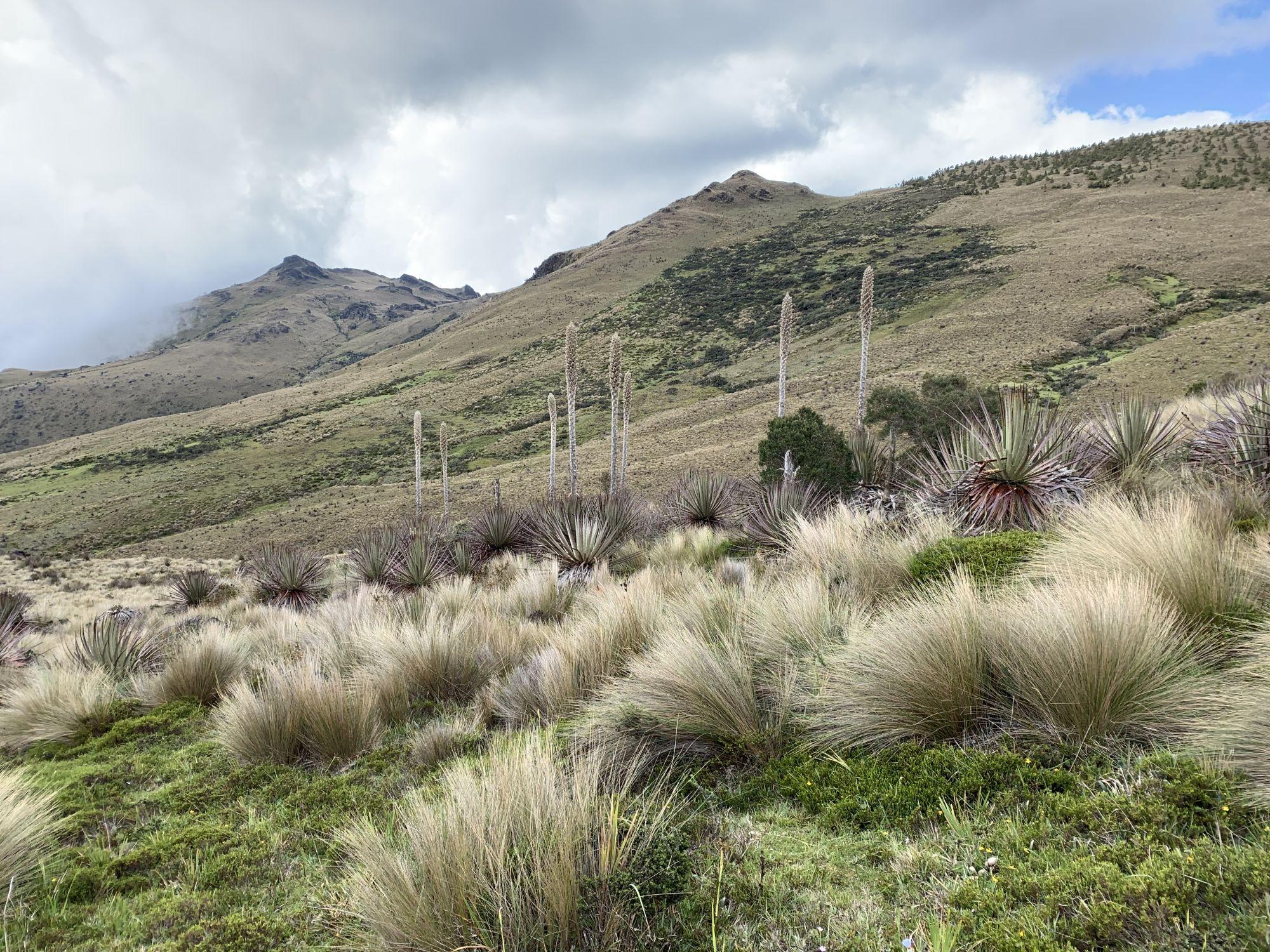 Paramo Cerro de Arcos SW Ecuador Sam Woods IMG 2741