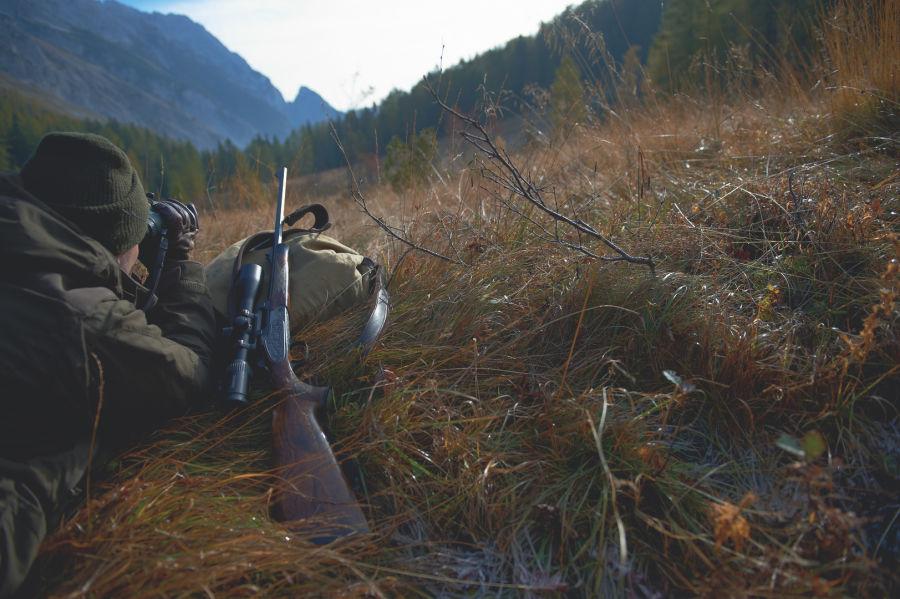 Z6i Hunting spotting ID: 352469