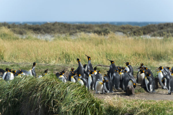 If you want to admire Chilean penguins, plus bottlenose dolphins and sea lions in their natural habitat, visit the Pingüino de Humboldt nature reserve, north of La Serena.