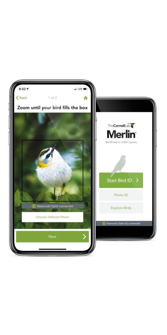 dG Merlin Bird ID App with phone bird