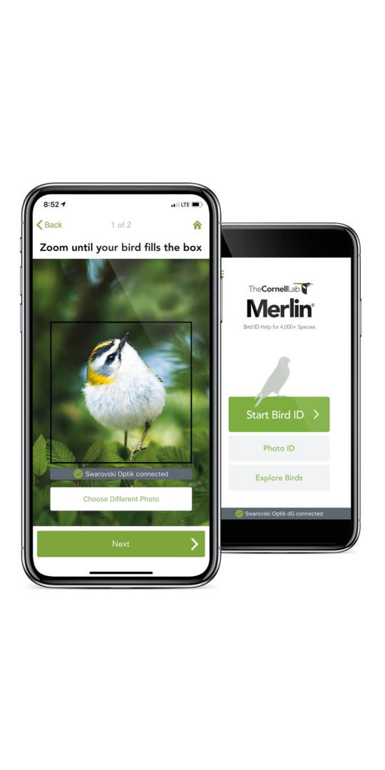 dG Merlin Bird ID App with phone bird