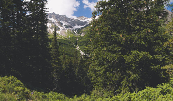 Landscape Forest Mountains Austria ID 346468