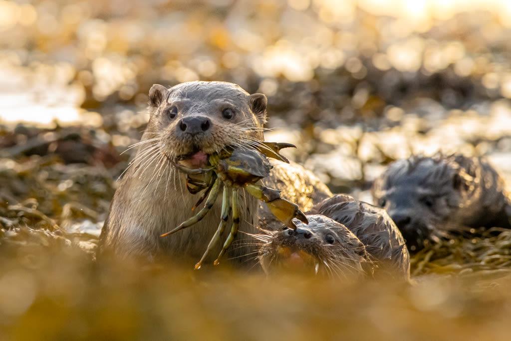 Mum feeding young cubs by Brydon Thomason
