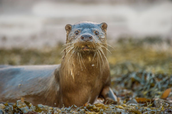 """An """"otter-ly"""" amazing day B/ O/ - Secondly: Get closer with the spotting scope"""