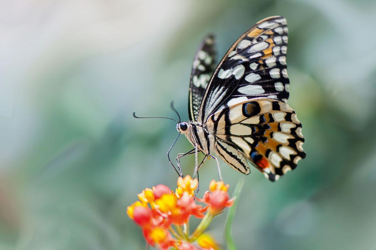 Biodiversity Butterfly Flower