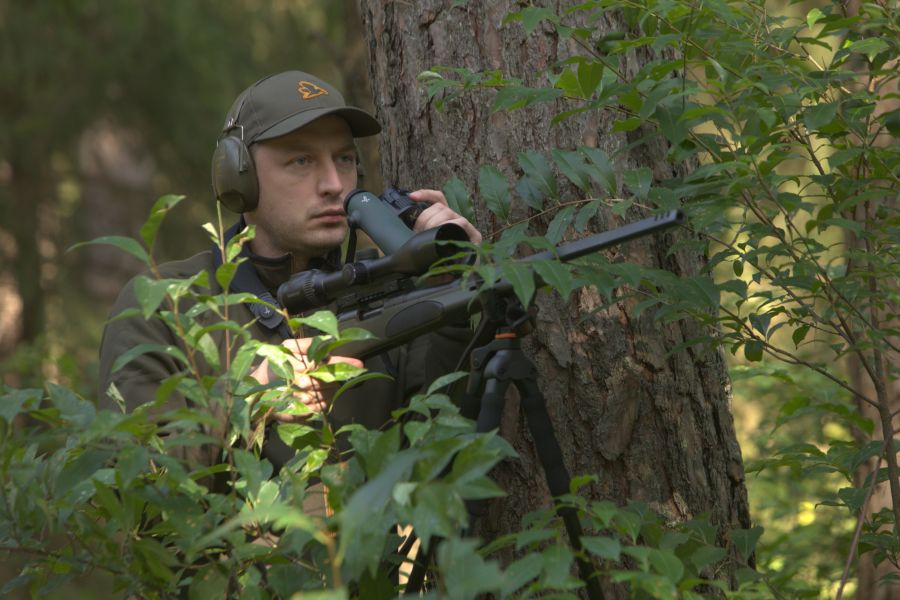 Hunting red deer in Poland - stalking woods