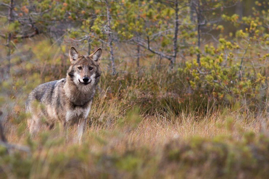 Wolf Jan Nordstrom
