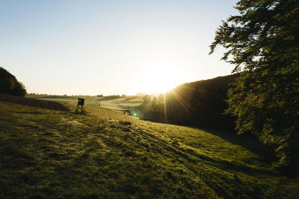 Open field in sunrise landscape