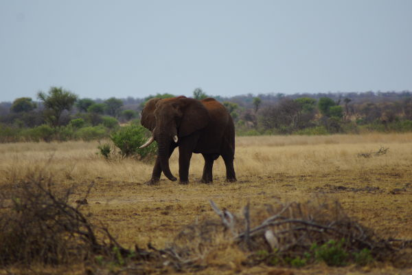 Namibia - Sustainable hunting in the Nyae Nyae Conservancy - elephant by Stephen Jacobs