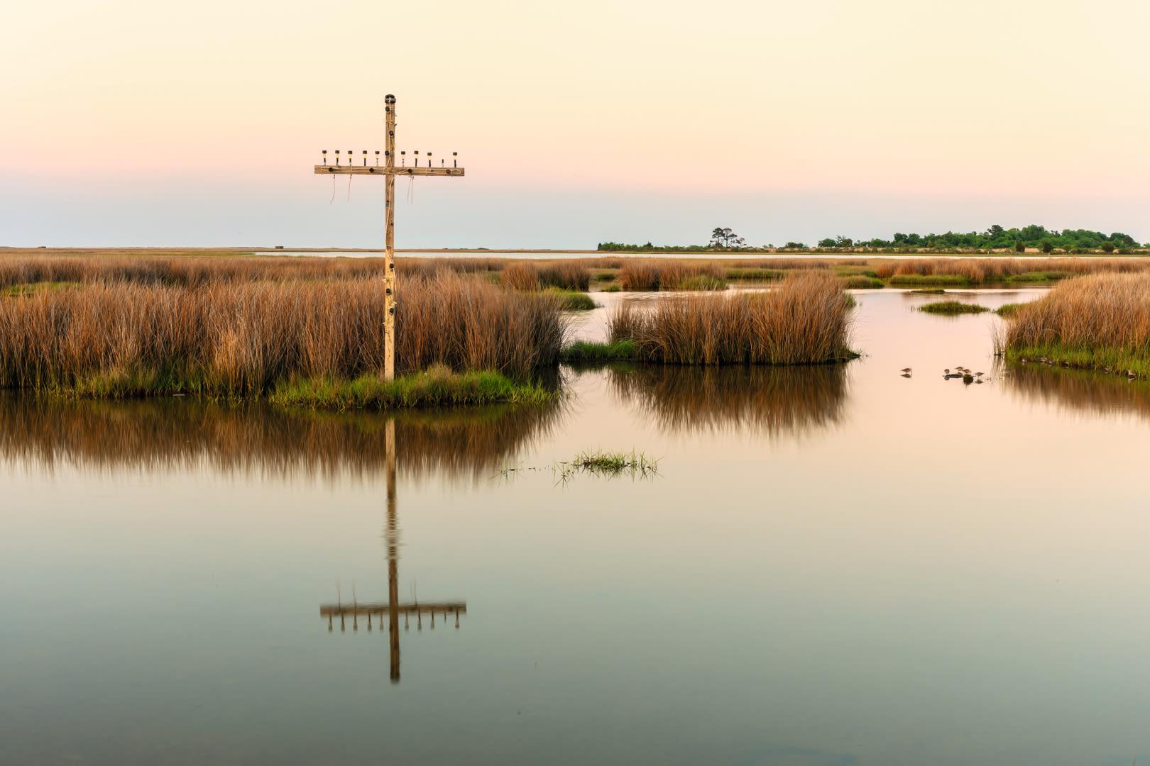 SWAROVSKI OPTIK Closer Birding-Magazin, 2020, Cross standing in marsh of Chesapeake Bay, Poquoson, Virginia, United States