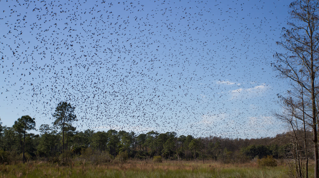 Rick Bateman The Freedom to experience more Swarovski Optik Binoculars Bird swam