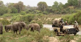 Elephants and Jeep