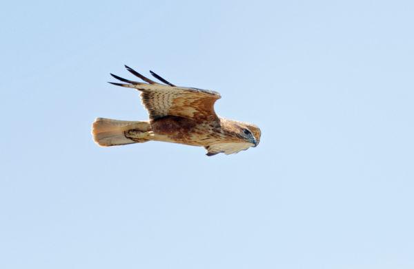 Swarovski Optik Birding Dick Forsman Spotting scope