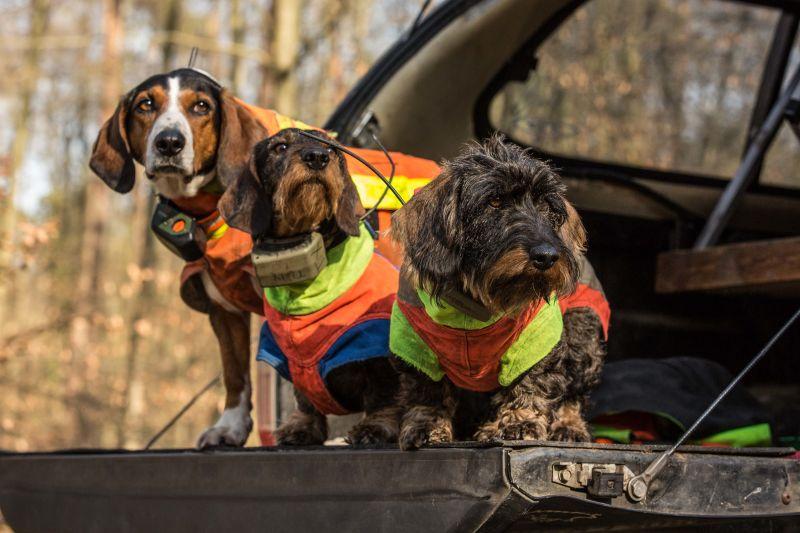 Alena Steinberg, dogs