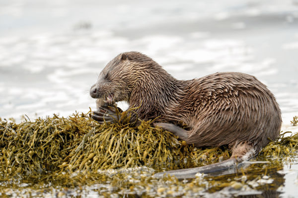 Fascinated by otters since childhood by Brydon Thomason